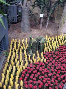 南山植物园-重庆-行走的小羊驼