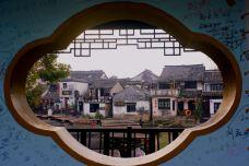 送子来凤桥-西塘-蓝色的郁金香88