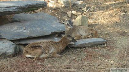 长沙生态动物园114