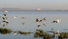 奈瓦沙湖-纳库鲁-东西南北游