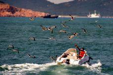 海驴岛-荣成-doris圈圈