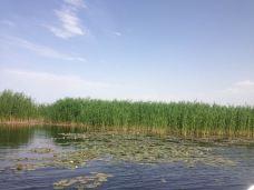 博斯腾湖-巴音郭楞-豆豆逗逗