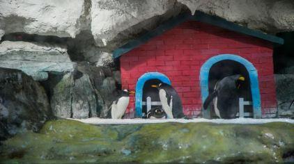 杭州极地海洋公园 (22)