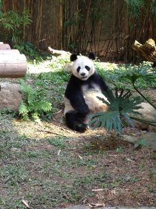 长隆野生动物世界-广州-小A找真心