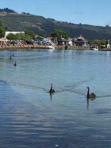 罗托鲁瓦湖-罗托鲁瓦-上海项羽