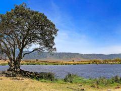 东非10日--探索野性之美