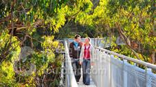 伊拉瓦拉树顶漫步道