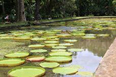 庞普勒斯植物园-毛里求斯-西西利波维奇