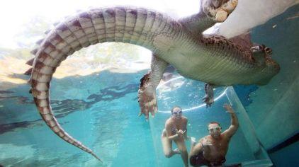 狸和鳄鱼_可可洛思鳄鱼湾主题公园门票