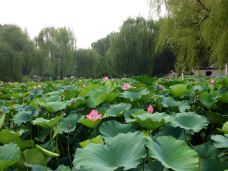 红山公园-赤峰-Ting