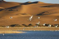 腾格里沙漠天鹅湖-阿拉善左旗-┈┾大 丈 夫 ︶ㄣ