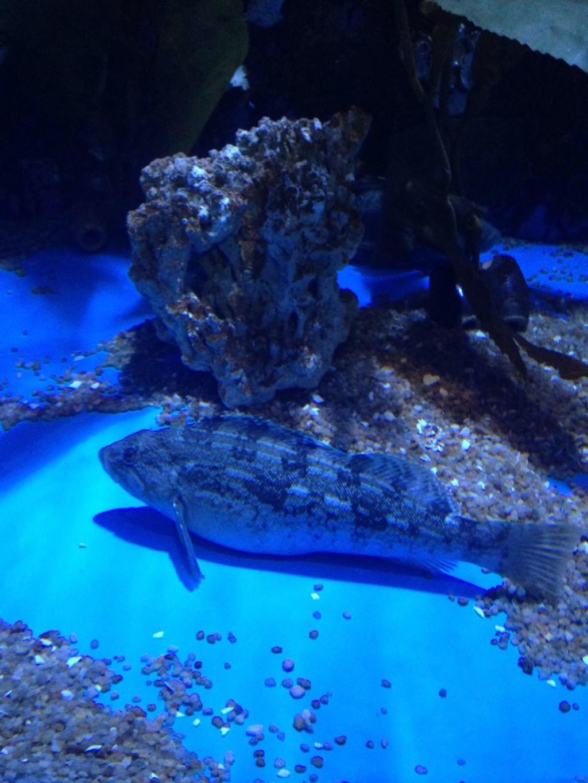 青岛的海底世界_美丽的青岛海底世界 - 青岛游记攻略【携程攻略】