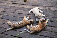 长隆野生动物世界-广州-钟小瓜好多想法