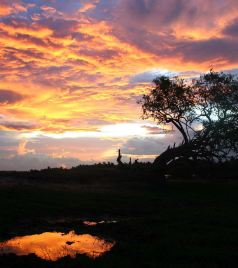 Pinnawela游记图文-迟到的暑假-锡兰国11天奇妙之旅