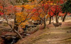 奈良-doris圈圈