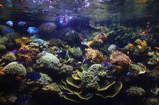 圣淘沙名胜世界海洋生物园-圣淘沙岛-moo****ng