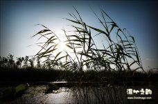 汉石桥湿地-顺义区-愚夫之宝