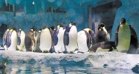 珠海长隆横琴湾酒店1晚+海洋王国2日无限次票+激爽水世界(自选2人/3人套票房型)