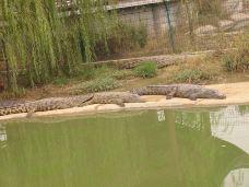 中国扬子鳄村-湖州-123-traveller