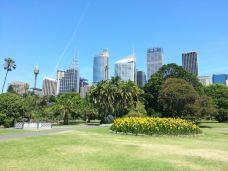 皇家植物园-悉尼-little-e