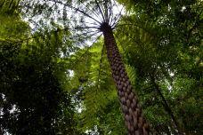 蓝山-新南威尔士州-tao7118190