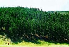 贺兰山原始森林-阿拉善-尊敬的会员